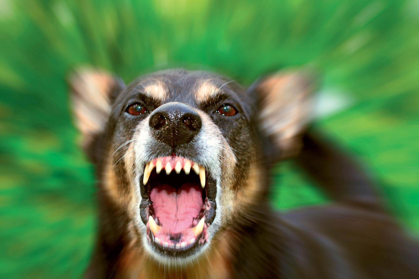 Aggressività canina: conoscerla e risolverla