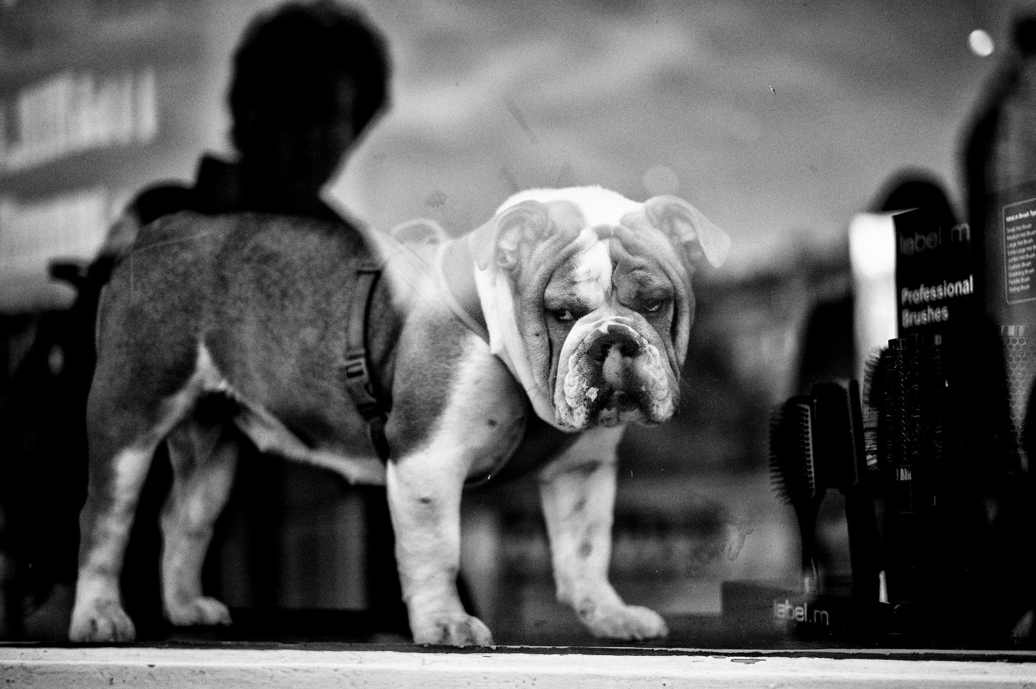 A ogni strada il suo cane nelle foto di Alan Schaller