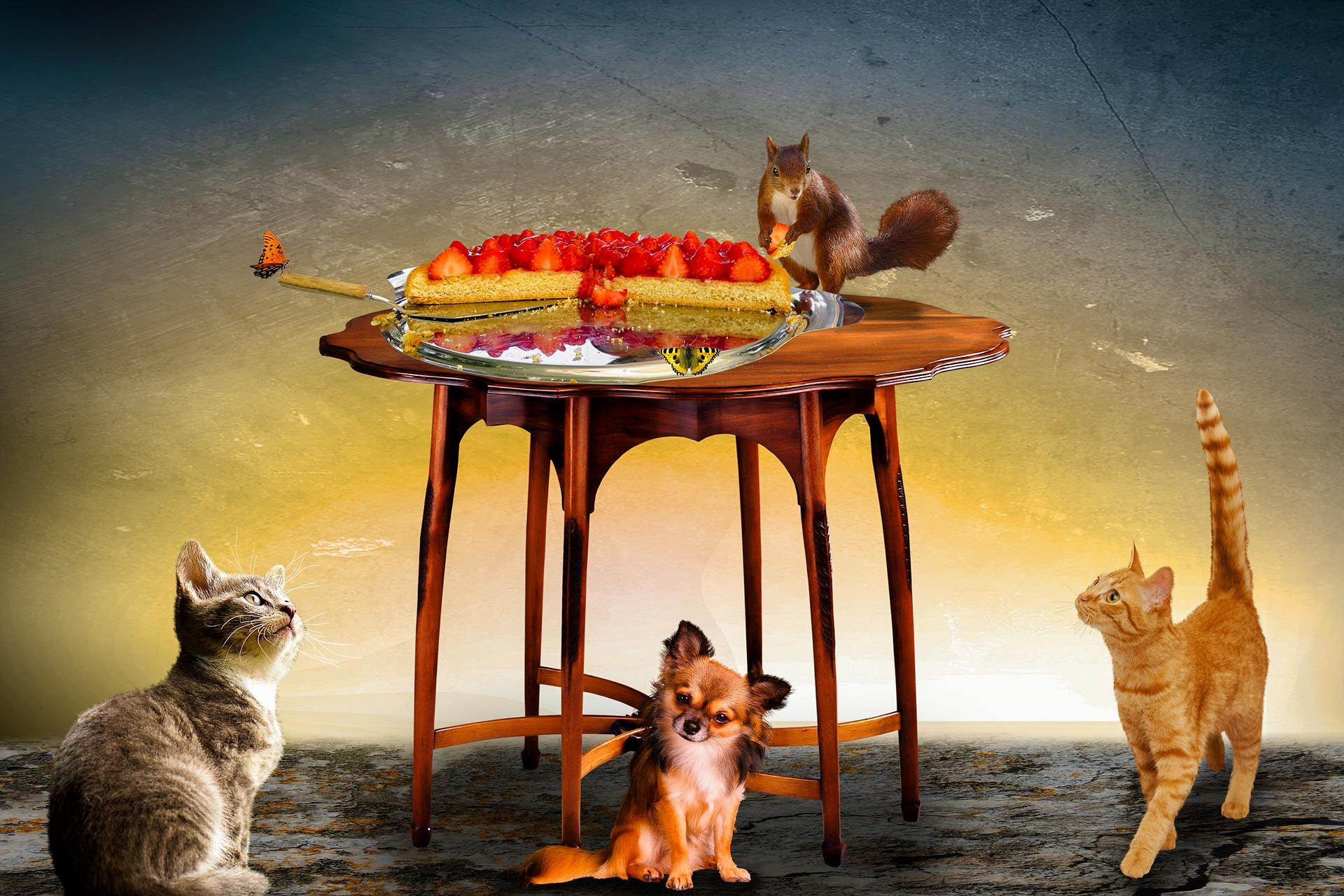 Ecco gli alimenti della nostra tavola dannosi per il cane