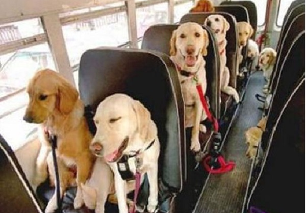Il cane e i mezzi di trasporto urbano: ecco le regole