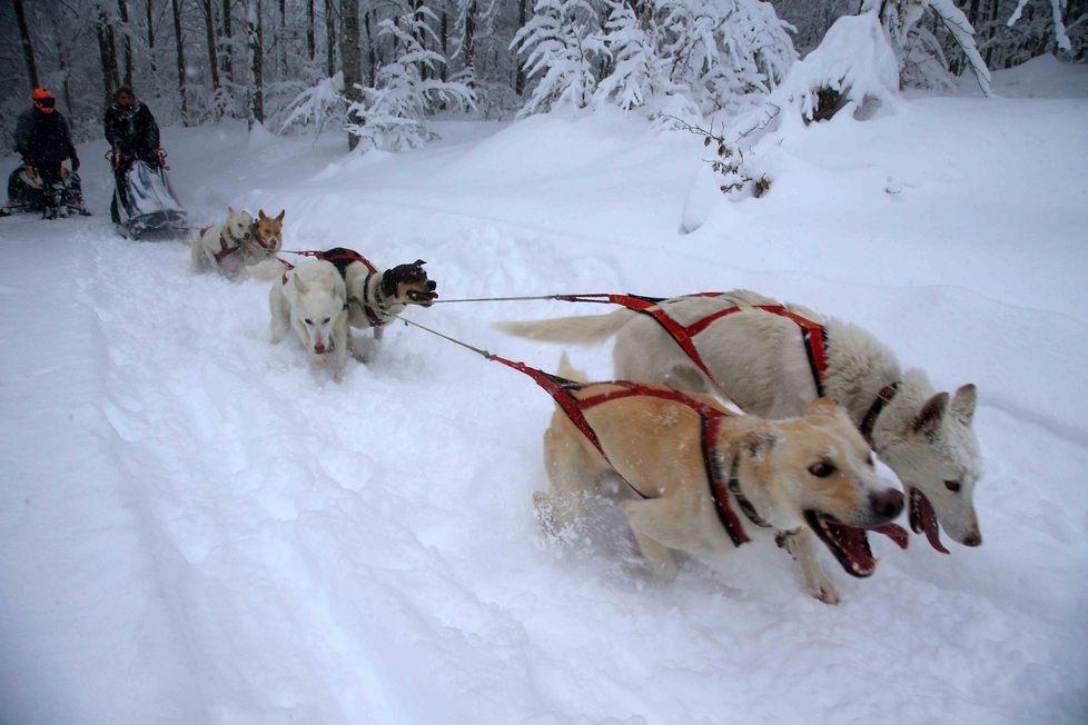 Balla coi lupi: i cani da slitta attraversano l'Appennino