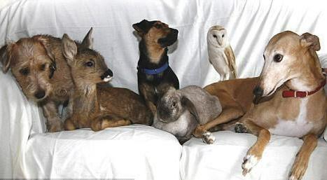 Jasmine: il levriero che adottò più di 50 animali!