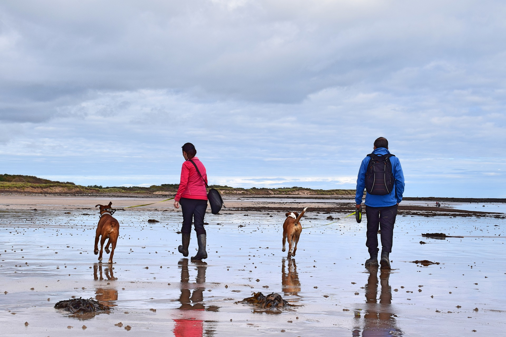 Il proprietaro di un cane raggiunge numeri record: merito delle passeggiate!