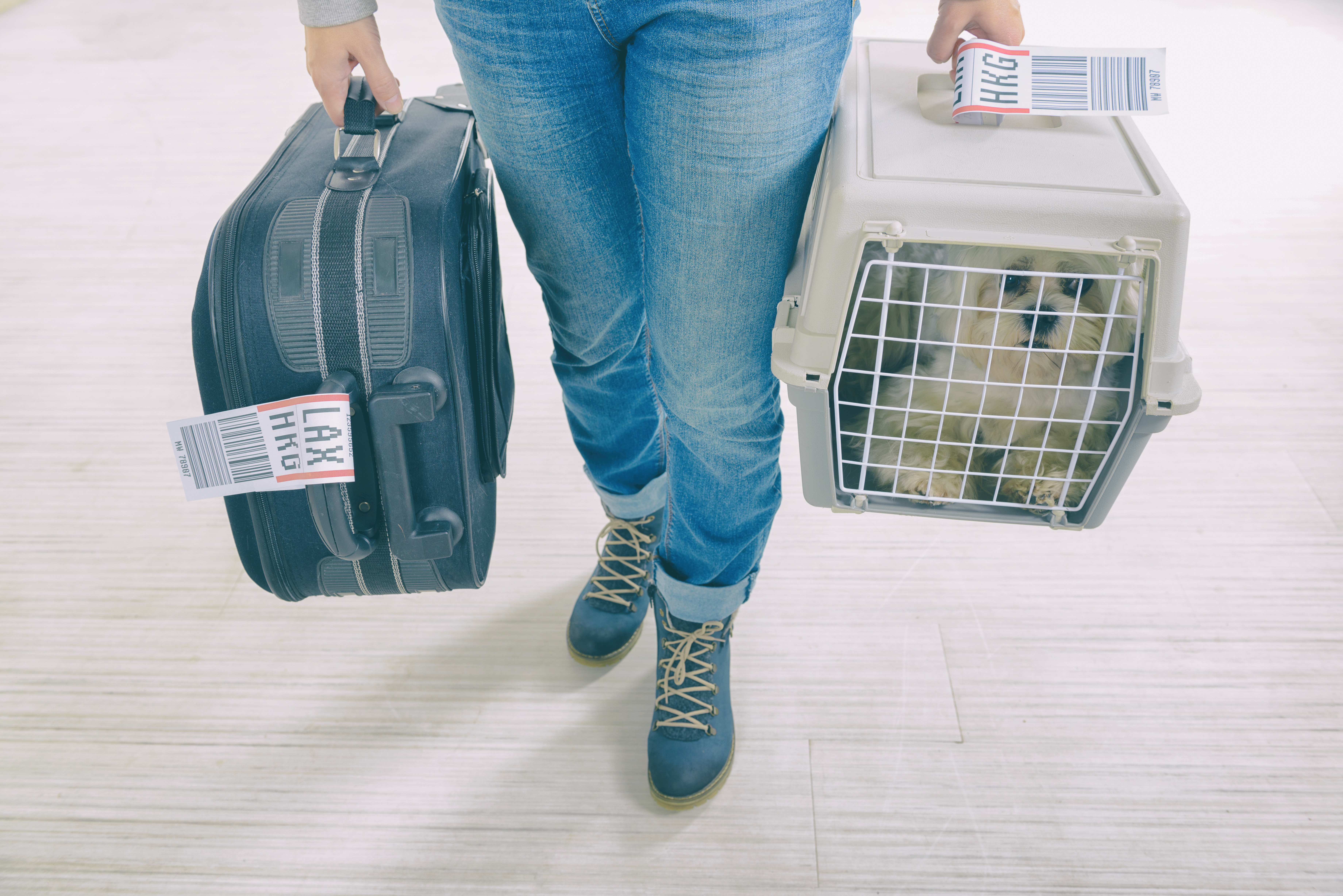 Un cane è morto a bordo di un aereo: costretto a viaggiare nella cappelliera
