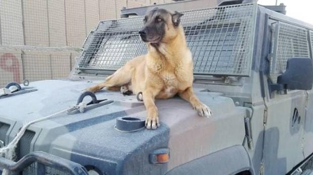 Addio a Jimmy: il cane anti-esplosivo dell'esercito italiano