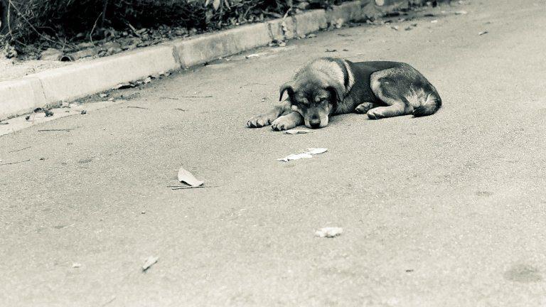 Incidenti Causati Da Un Cane Randagio Il Comune Non è Più Responsabile