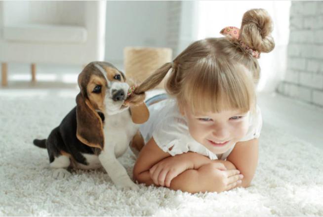 I sintomi del disturbo da deficit di attenzione si attenuano con la compagnia di un cane