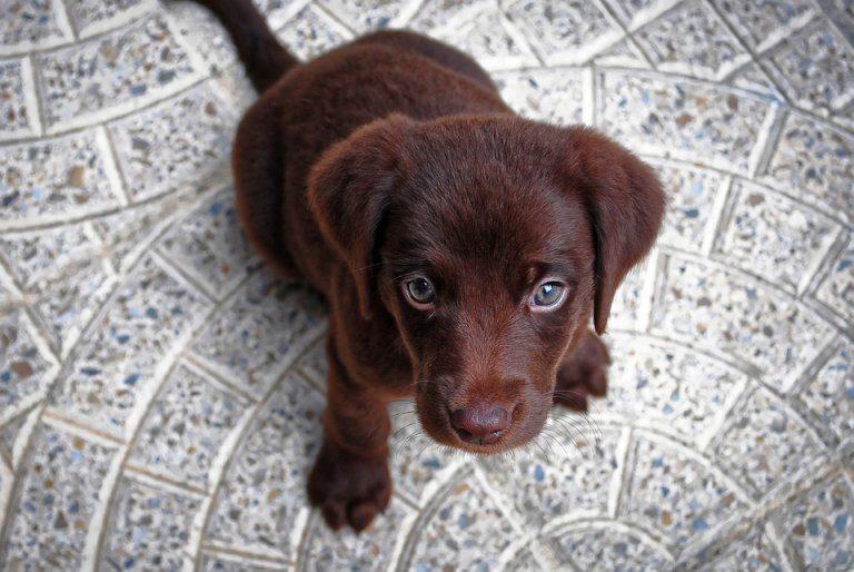 Razze Per La Pet Therapy Quali Sono Le Più Adatte