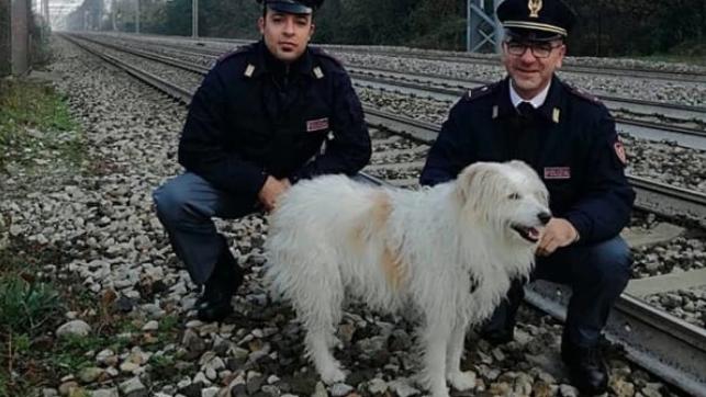 Perla: la cagnolona brianzola salvata dalla Polfer
