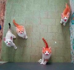 Cuccioletti