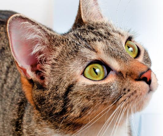 """Il turismo """"felino"""": mille mete, una più bella dell'altra"""