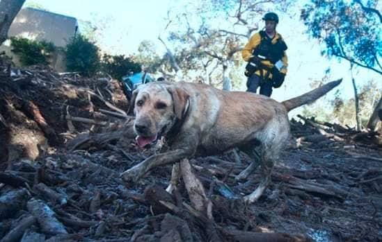 17 Cani salvati dagli incendi della California