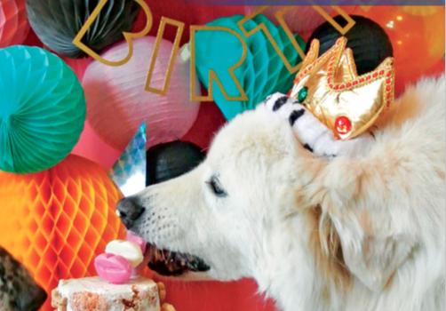 Come organizzare una festa per cani, gatti o conigli