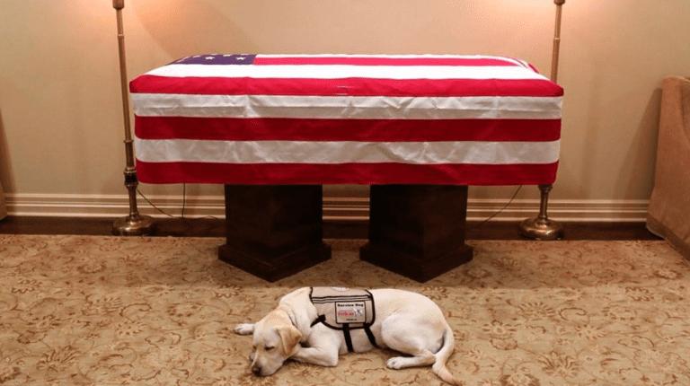Sully, il cane che non abbandona Bush padre