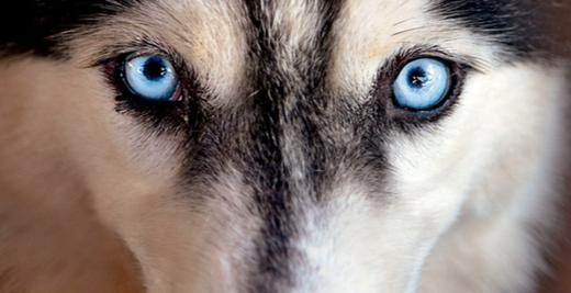 Scopri i Superpoteri del tuo cane!