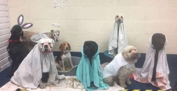 Adorabili cani rappresentano il presepe - Amici di Casa