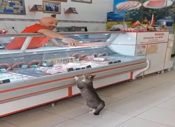 VIDEO: Un macellaio diventa famoso grazie a questo divertente gattino