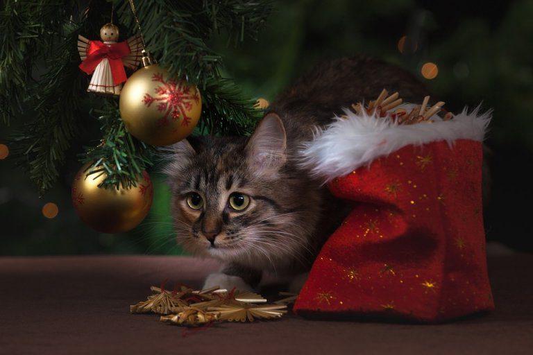 Albero Di Natale Per Il Gatto Amici Di Casa