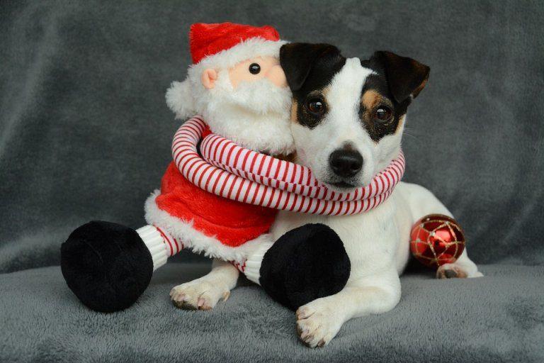 Immagini Natalizie Con Cani.Natale Con Cani E Gatti Attenzione A Decorazioni E Dolci