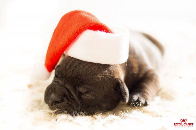 Pranzo Di Natale Per Cani E Gatti I Consigli Di Royal Canin Amici