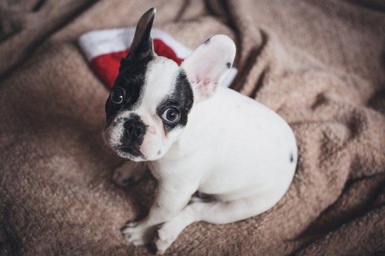 Truffe On Line Di Cani E Gatti A Natale Venduti Cuccioli Che Non