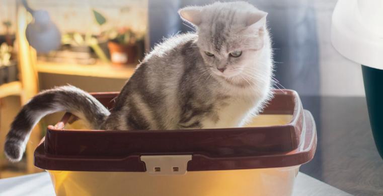Il gatto fa i bisogni fuori dalla lettiera? Scopriamo perchè
