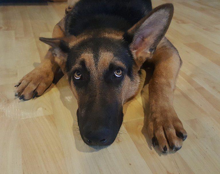 Capodanno Fuggiti Più Di 500 Animali Spaventati Botti Amici Di Casa