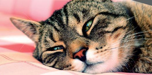 Come abituare il gatto a un nuovo ambiente?