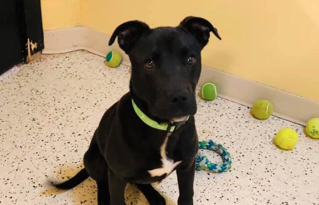 Cane sopravvissuto all'eutanasia, trova famiglia!