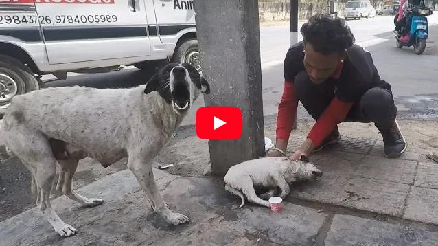 Cagnolina piange il cucciolo ferito ma poi…