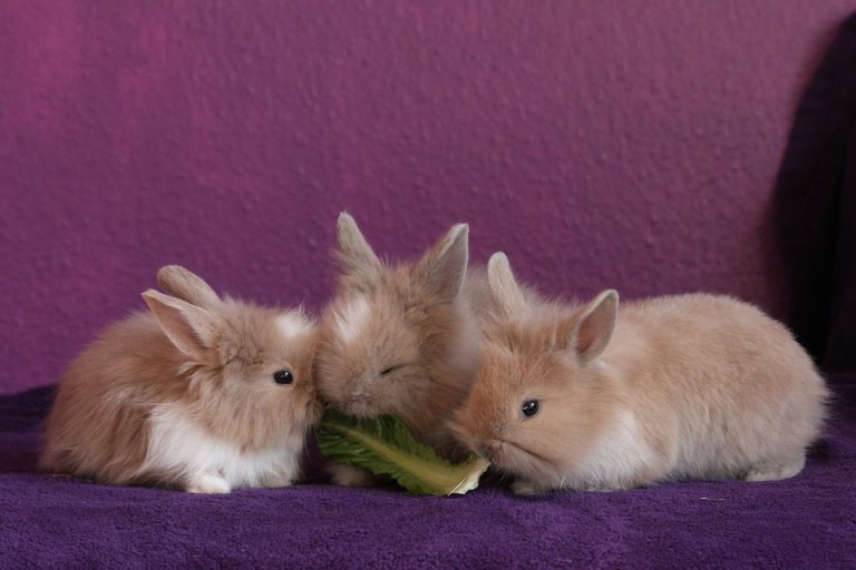 I Conigli Quanto Mangiano Amici Di Casa
