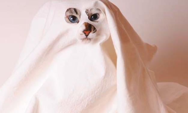 Gatti e fantasmi.. una storia vera?