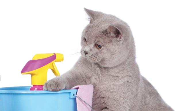 Gatto ingerisce veleni casalinghi: facciamo attenzione!