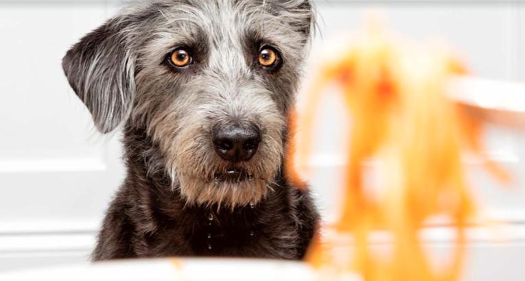 Il cane chiede cibo dalla nostra tavola? Scopriamo perchè!