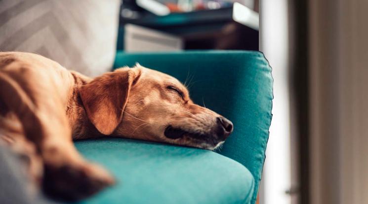 Solitudine del cane: una condizione innaturale
