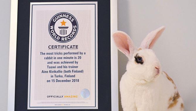 Un coniglio da Guinness dei primati