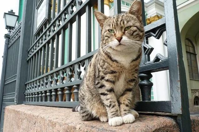 Il 28 marzo: Giornata del gatto dell'Hermitage