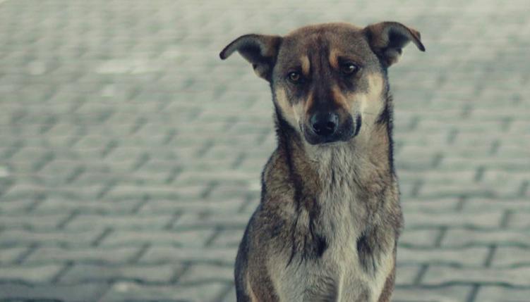Il cane abbandonato: come acquistare la sua fiducia?