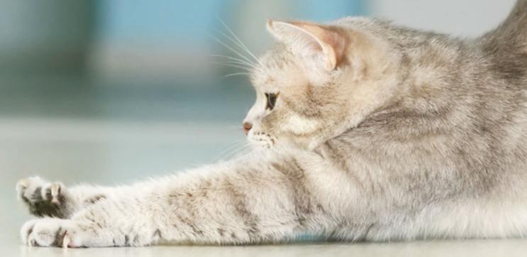 Praticare yoga con il gatto: più rilassati con il nostro micio