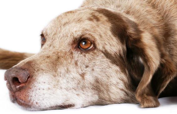 Intolleranze alimentari nel cane: come agire?