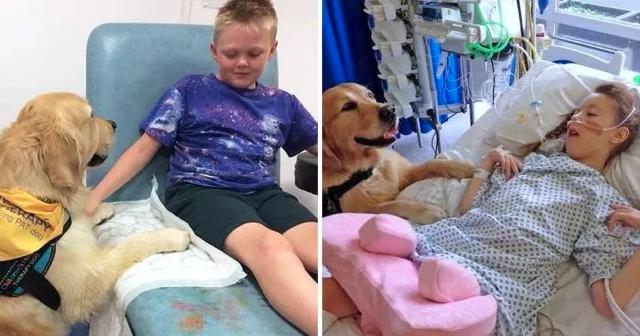 I cani aiutano i bambini a superare l'ansia da ospedale