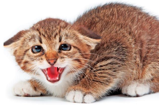 Gatto stressato: i segnali per riconoscerlo
