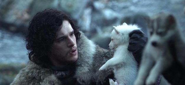 Aumentano gli abbandoni di Husky: diventati una moda dopo il Trono di Spade