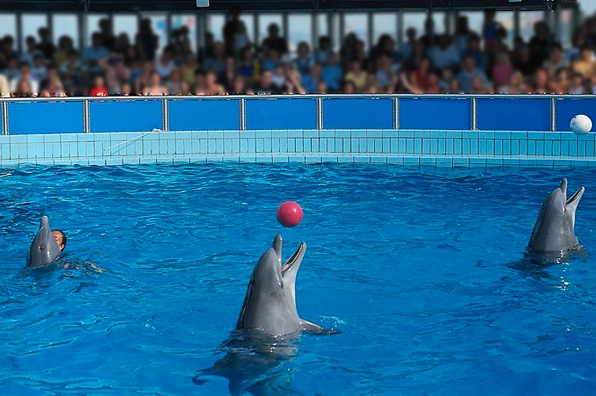 La LAV salva i delfini di Rimini!
