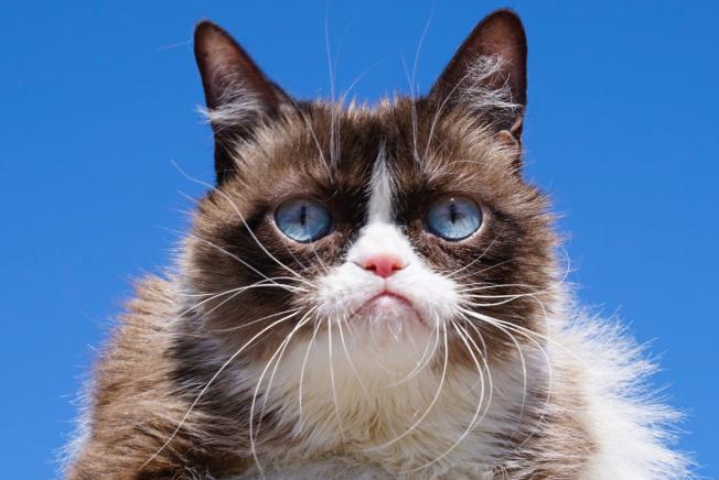 Morto Grumpy Cat: la star del web lascia un patrimonio di 100 milioni di dollari