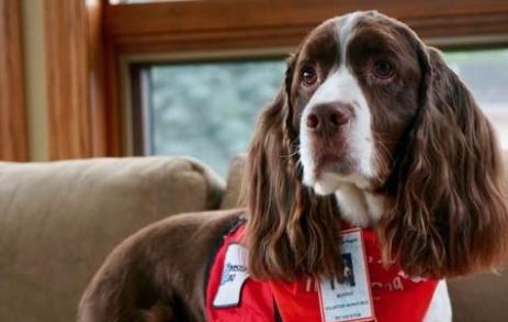 Murphy: il cane contro l'ansia per i pazienti dell'ospedale