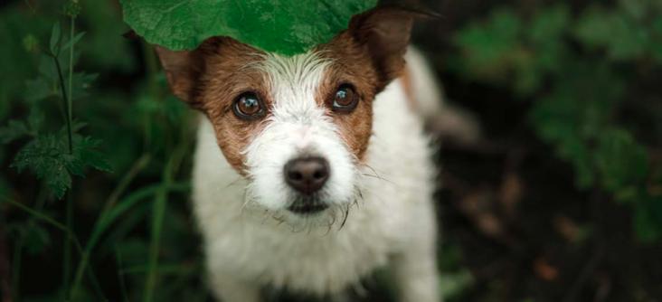 Come soccorrere un cane abbandonato per strada?