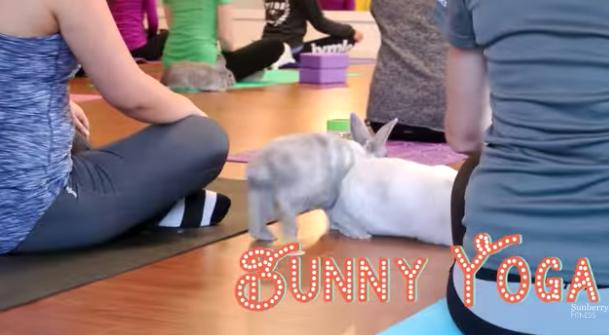 Lezioni di yoga con i conigli: una palestra raccoglie fondi per salvarli