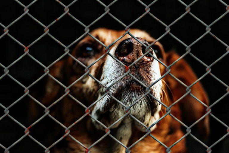 Yulin, il festival dove si mangia carne di cane