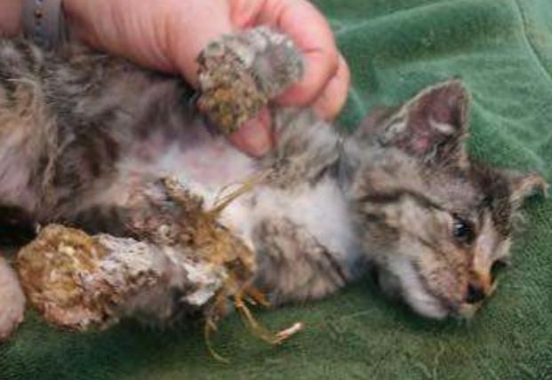 Gatto salvato dal bidone della spazzatura: era ricoperto di schiuma